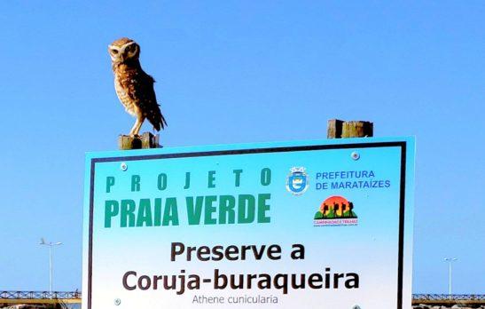 Corujas buraqueiras ganham mais proteção em Praia de Marataízes