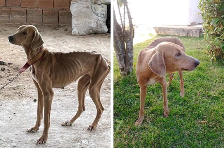 Cadela resgatada com desnutrição em Cachoeiro começa a ganhar peso