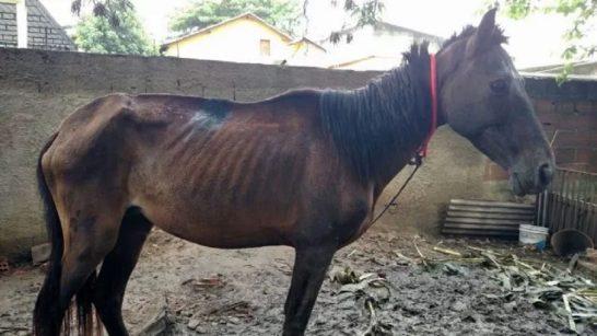 Menino socorre cavalo vítima de maus tratos e leva tiros de chumbinho no Zumbi