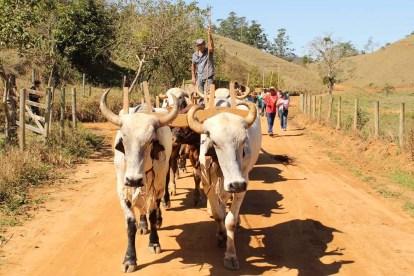 Festa do Carro de Boi de São José do Calçado. Foto: Divulgação