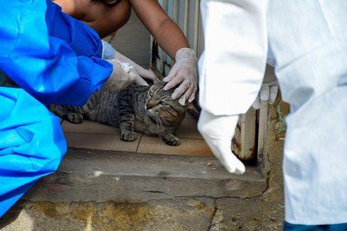 Projeto em tramitação na Assembleia quer agressor de animais pagando tratamento