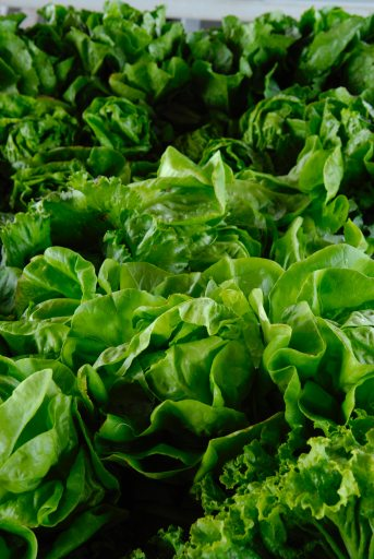 Leafy greens help diabetes