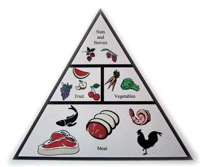 Paleolithic Pyramid - Karolinska Institute diet study h-healthhabits.wp.c 5-10-08