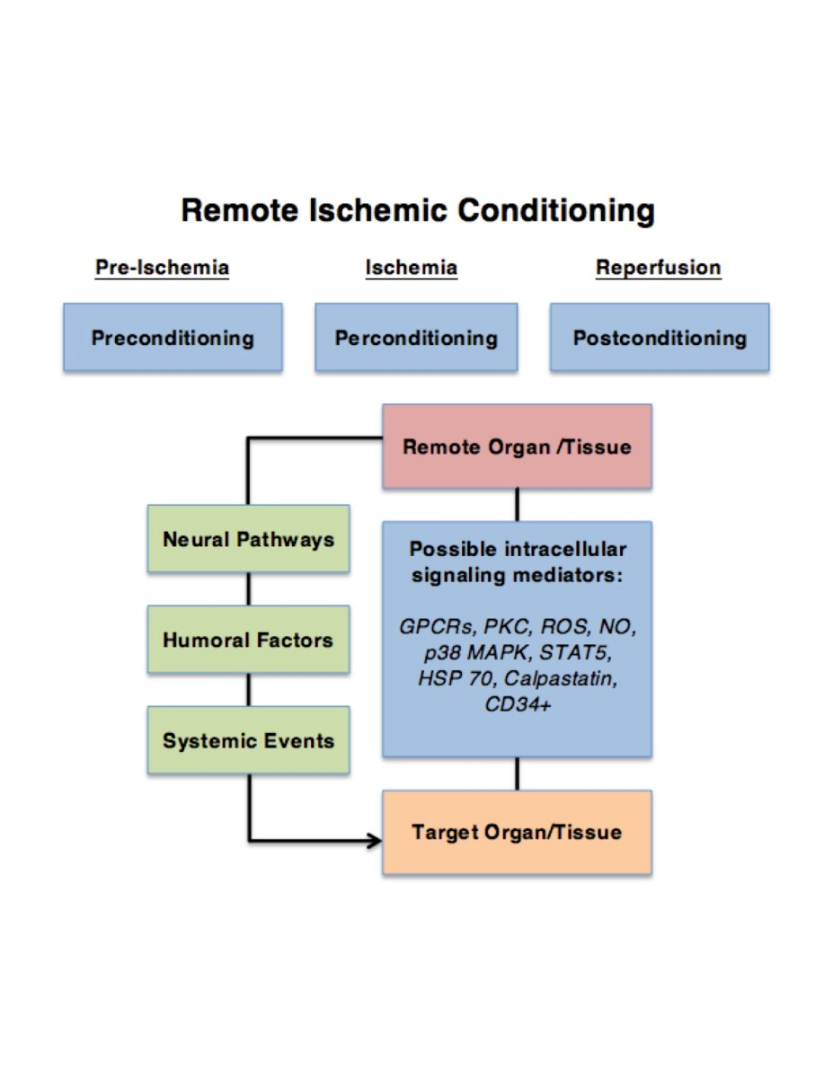 Remote Ischemic Conditioning: Promising Potential in Wound Repair in Diabetes?