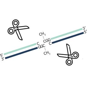 RRBSでDNAメチル化パターンを解析する