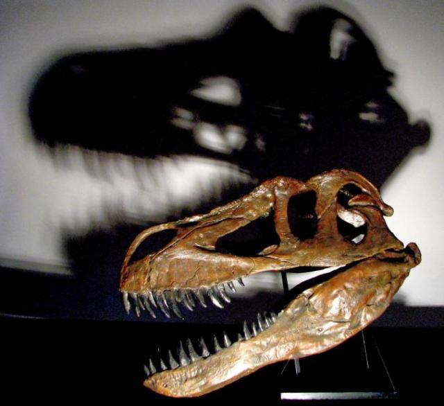 Torvosaurus gurneyi. Photo: nationalgeographic.com