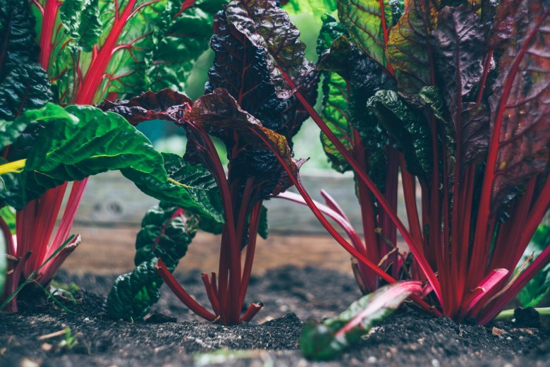 Leafy greens for healthy aging