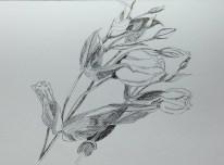 zwart wit roos