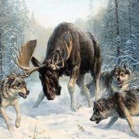Moose Battle Diamond Painting Kit
