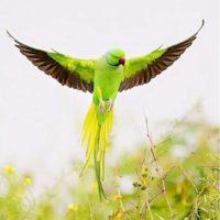 Green Parrot Diamond Painting Kit