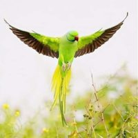 Green Parrot Diamond Painting Kit