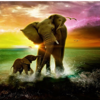 Elephant Beach Diamond Painting Kit