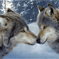 Wolf Kisses Diamond Painting Kit