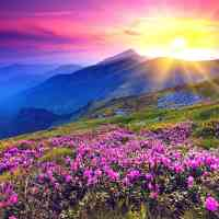 Purple Flower Mountains Diamond Painting Kit