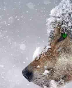 Diamond Painting - Wolf - 50x30 cm - Volledig - FULL - SEOS Shop ®