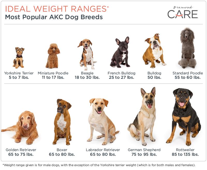 Ideal Weight Range Chart Per Dog Breed | Diamond Pet Foods
