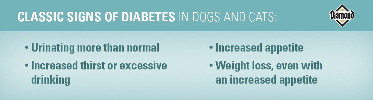 Classic Signs of Diabetes in Dogs and Cats   Diamond Pet Foods