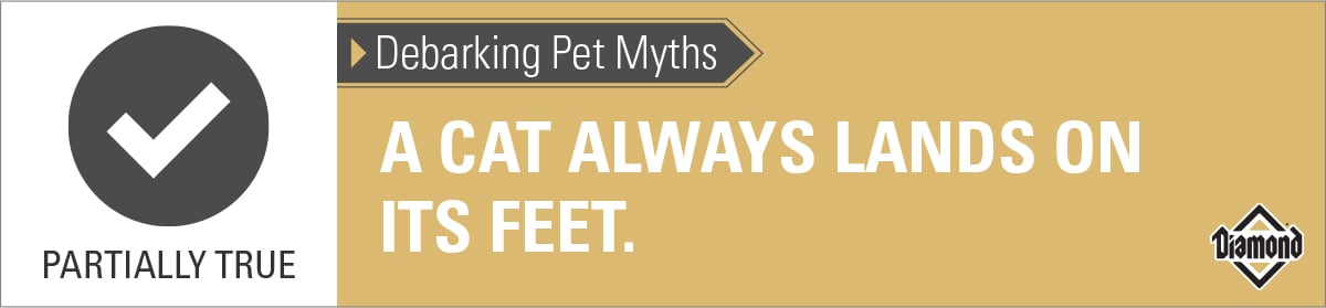 Cats Land on Their Feet Most of the Time | Diamond Pet Foods