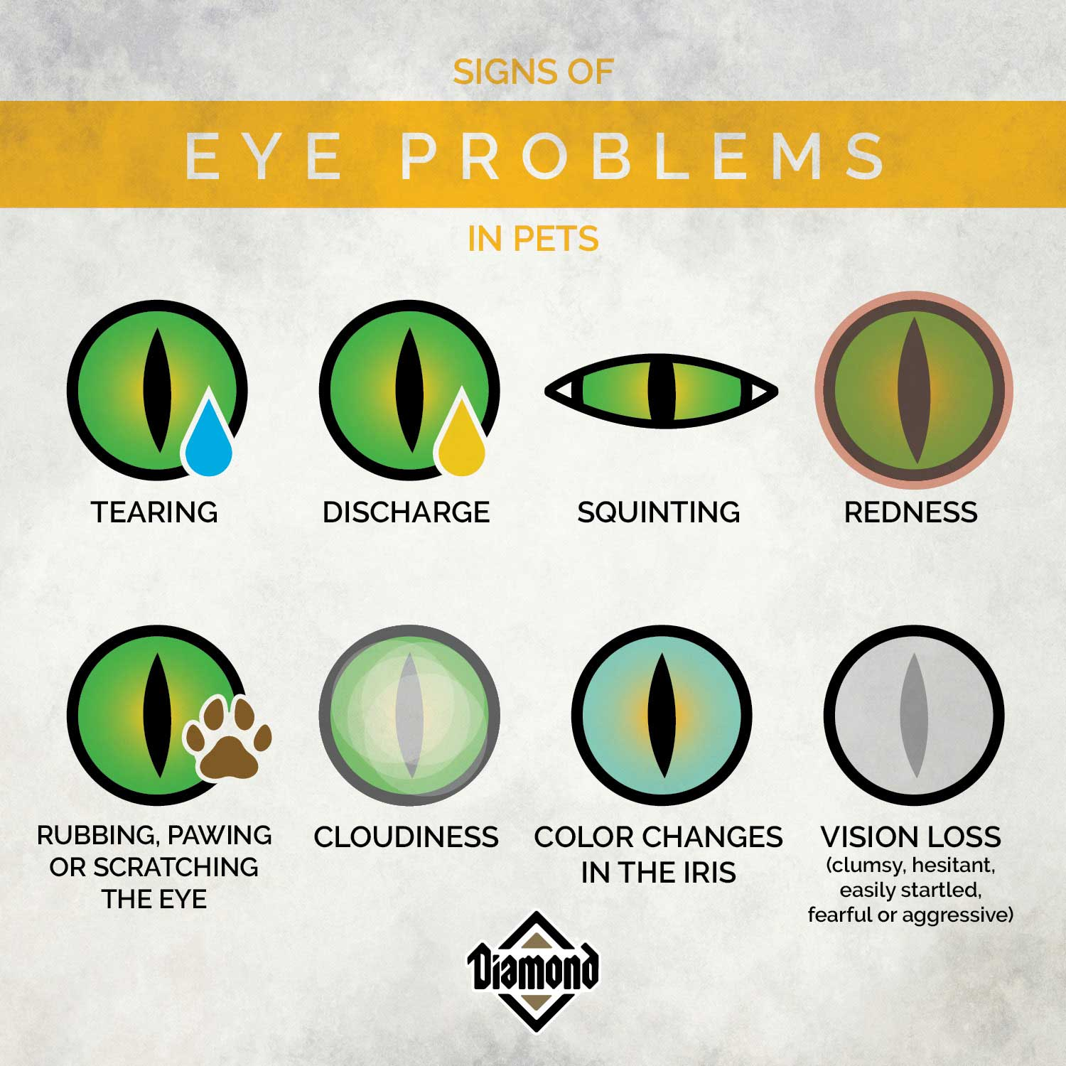 Signs of Eye Problems in Pets   Diamond Pet Foods