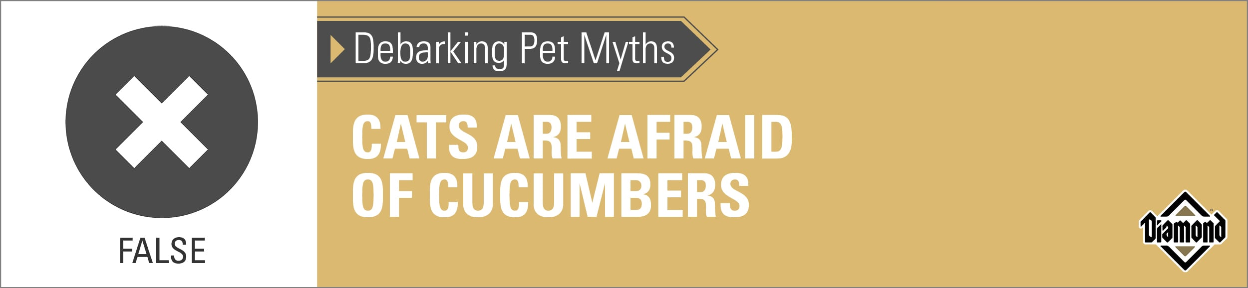 Cats are not afraid of cucumbers mythometer   Diamond Pet Foods