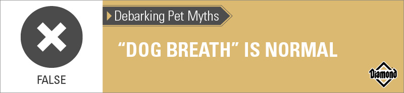 False: Dog Breath Is Not Normal   Diamond Pet Foods
