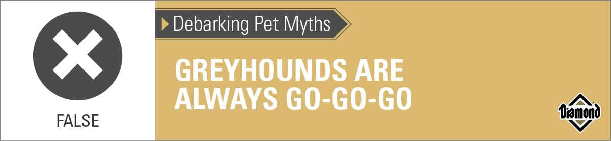 False: Greyhounds Are Not Always Go-Go-Go   Diamond Pet Foods