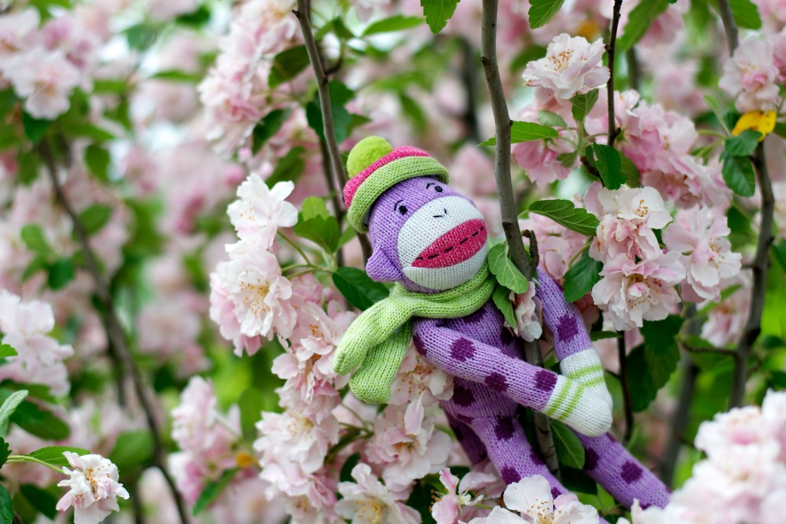 Sock Monkey Enjoying Tree Blossoms