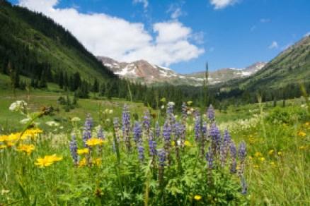wildflower view