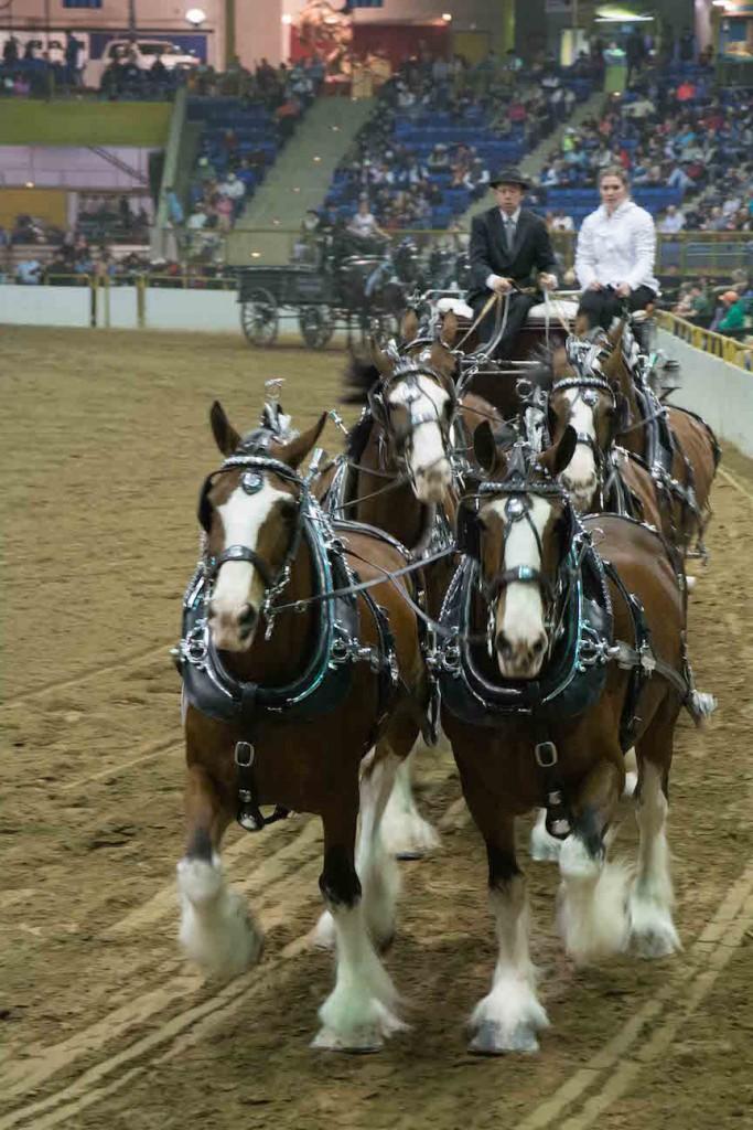 6 horse driven cart