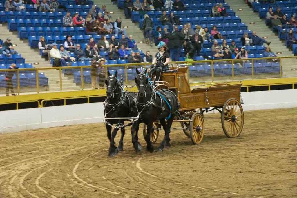 winner of 2 horse woman driven cart