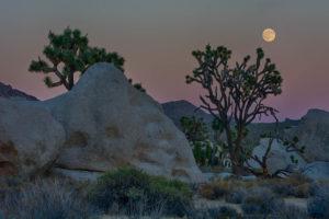 joshua-tree-full-moon