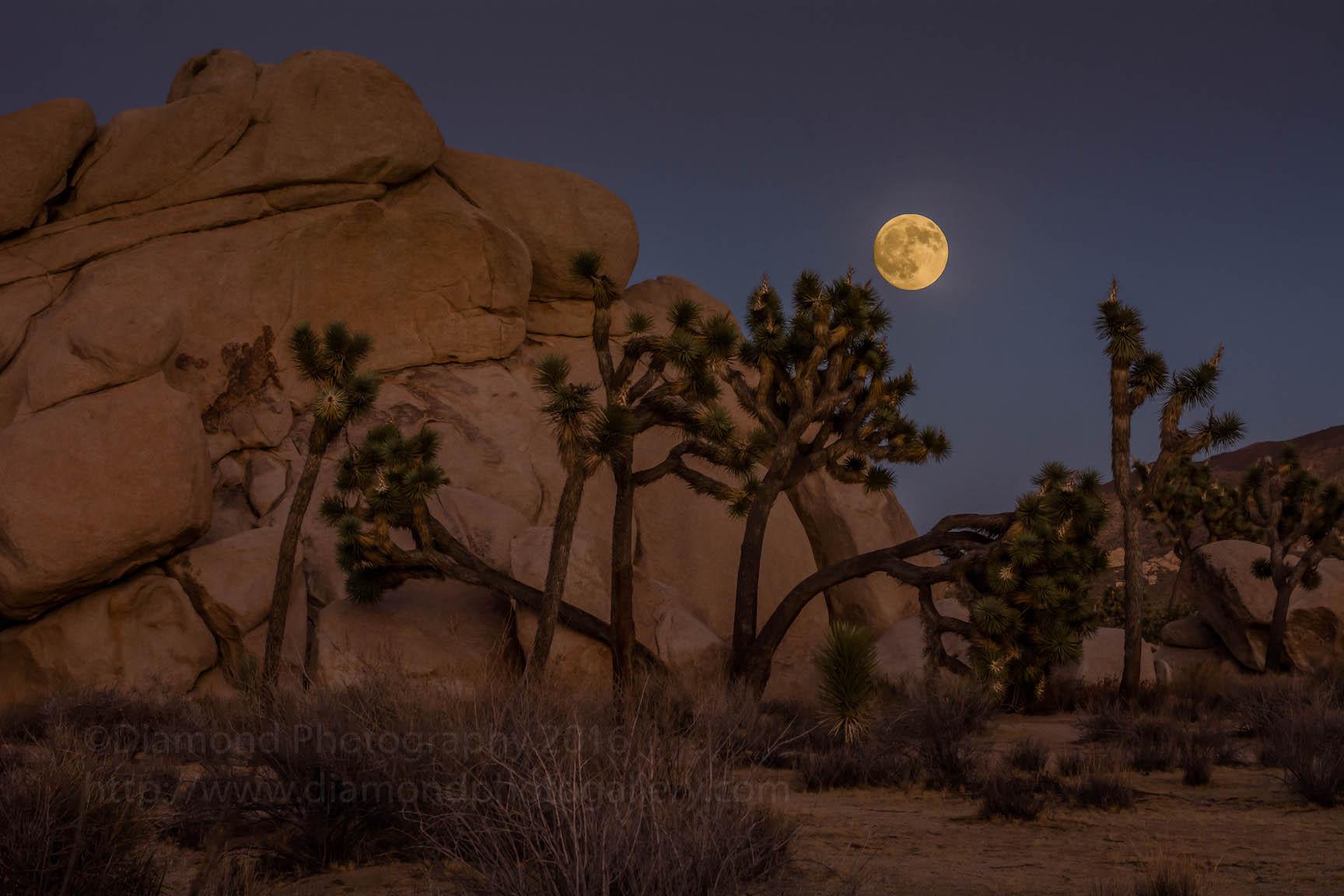 Joshua Tree Full Moon