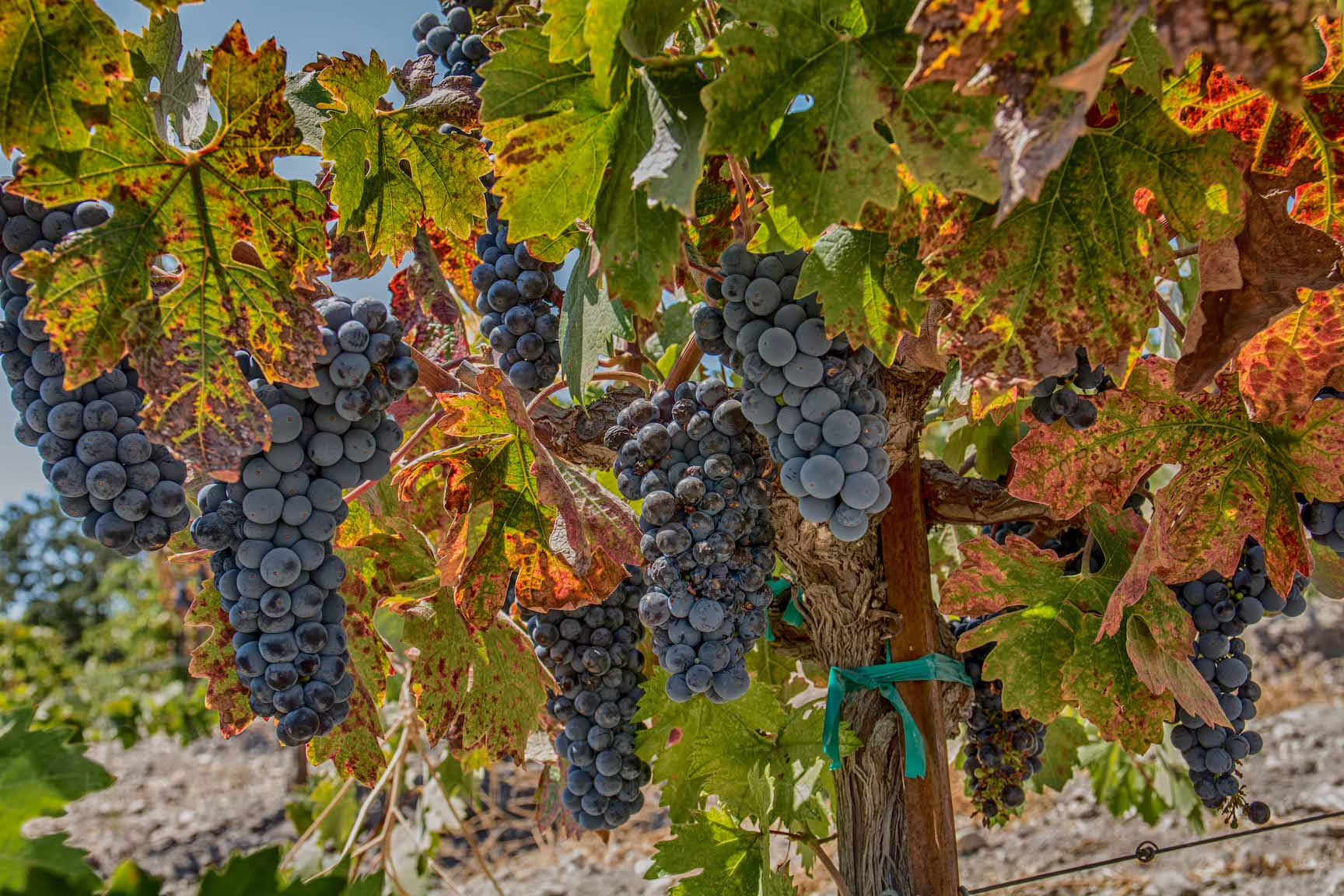 The beauty of central California wine county