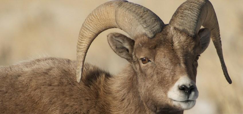 Amazing Yellowstone Wildlife