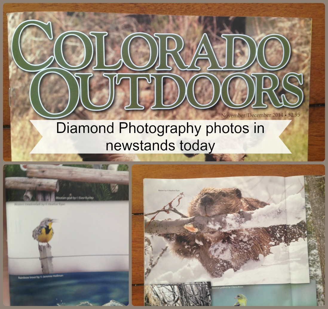 Colorado Outdoors Magazine 2014