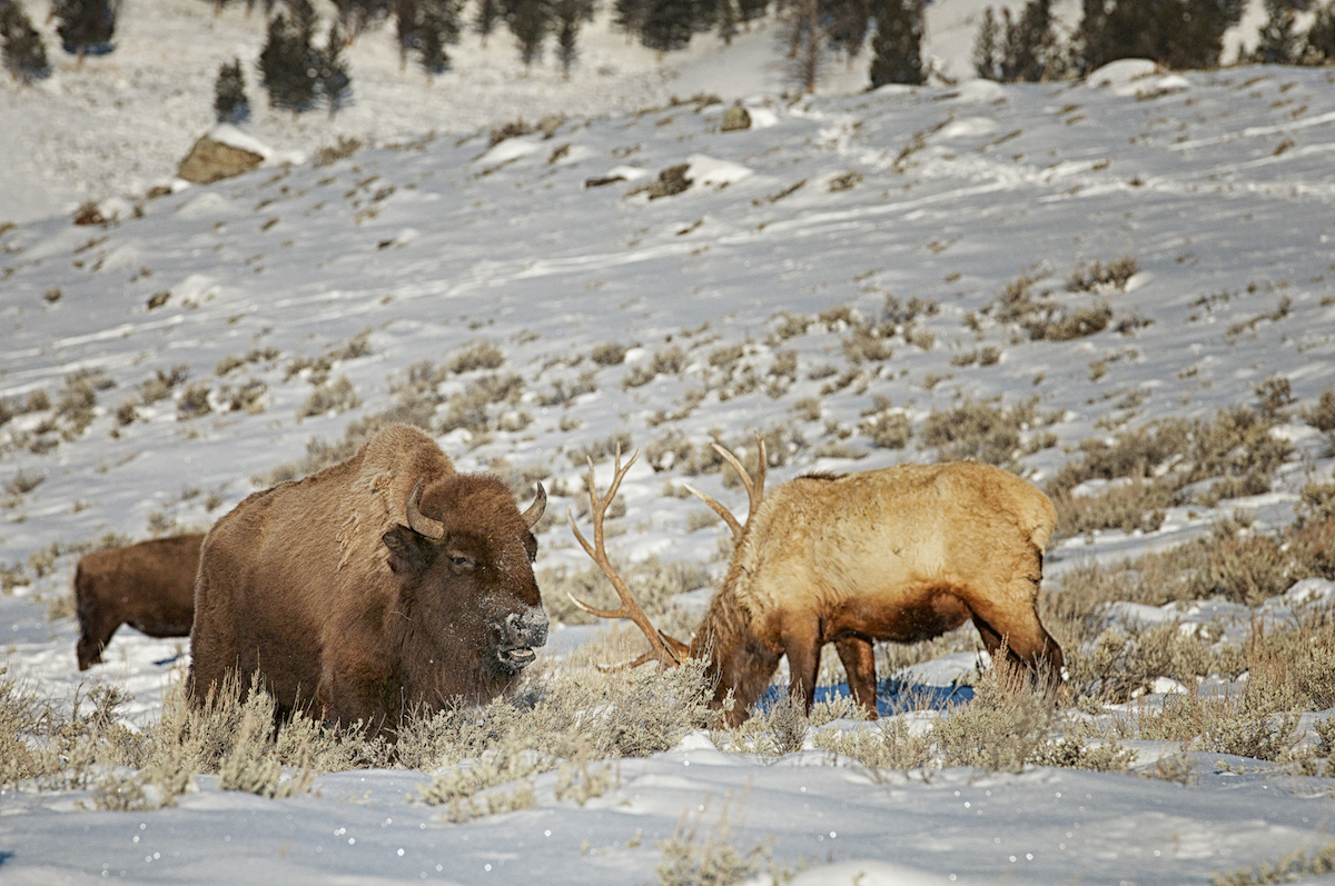 Yellowstone National Park – March 1, 1872