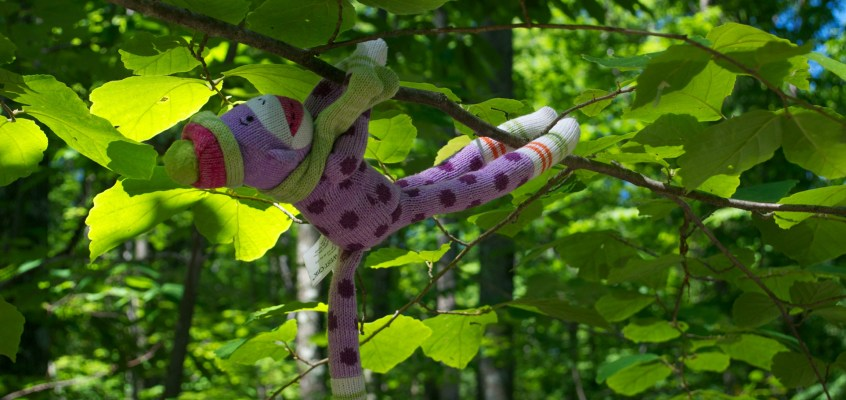 Adventures of Dottie, the sock monkey: Boston