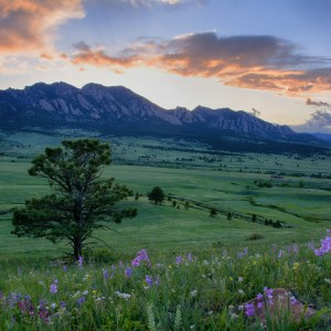 Boulder Wildflower Sunset – Steph