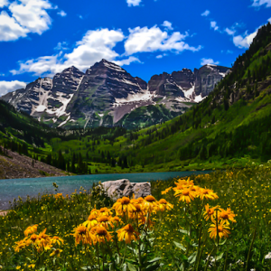Wildflowers at Maroon Bells