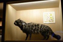 The Civet is one of the animals we used to get essences from (nowadays synthetic animal essences are used to protect the animal population).