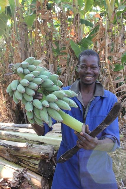 bananas in zambia