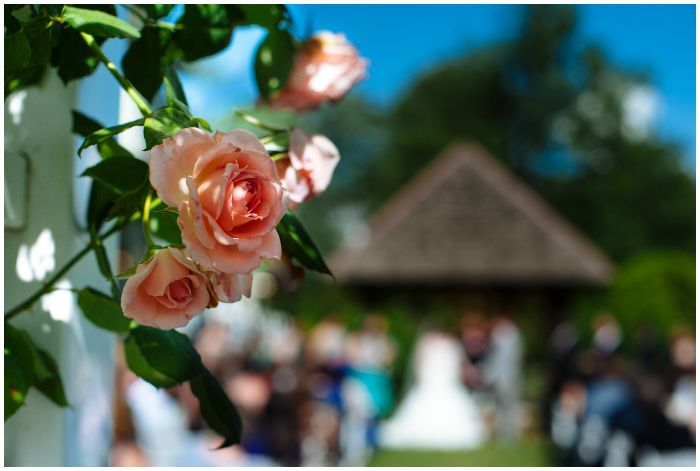 Roses at our Vandiver Inn wedding. Photography by Angel Kidwell.