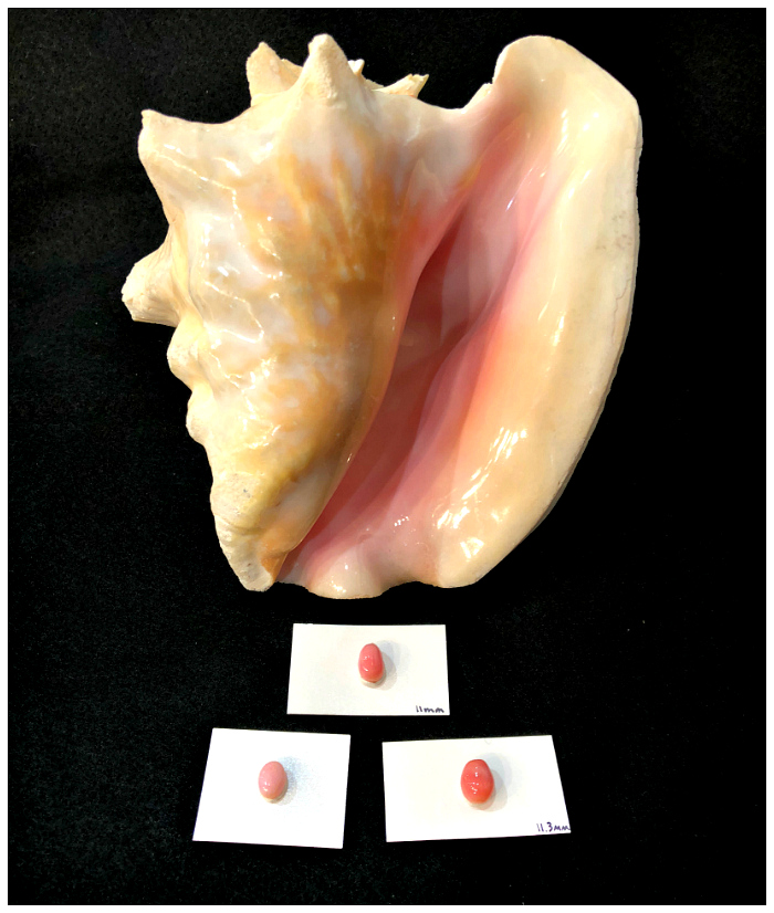 Pretty pink conch pearls are generally the rarest and most valuable in the world. These three are from American Pearl Company.
