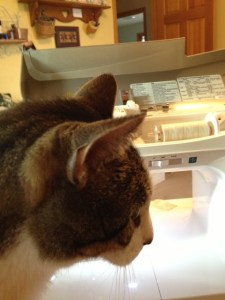 Wendell helping sew