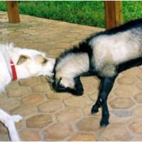 'Cross-Species' Animal Friendships in Africa