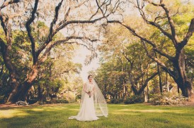 Bride in Row of Oak Trees
