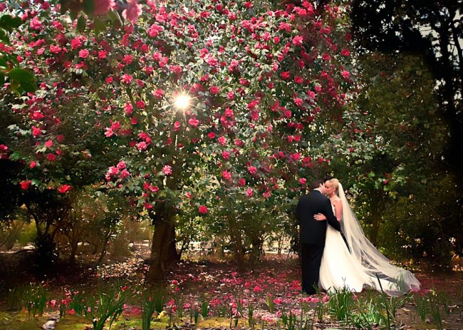 camelia garden bride and groom wedding portrait