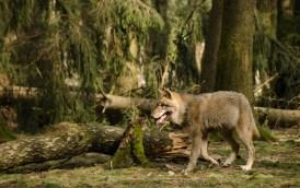Wolfsrudel-3