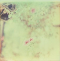 Polaroid Col 11