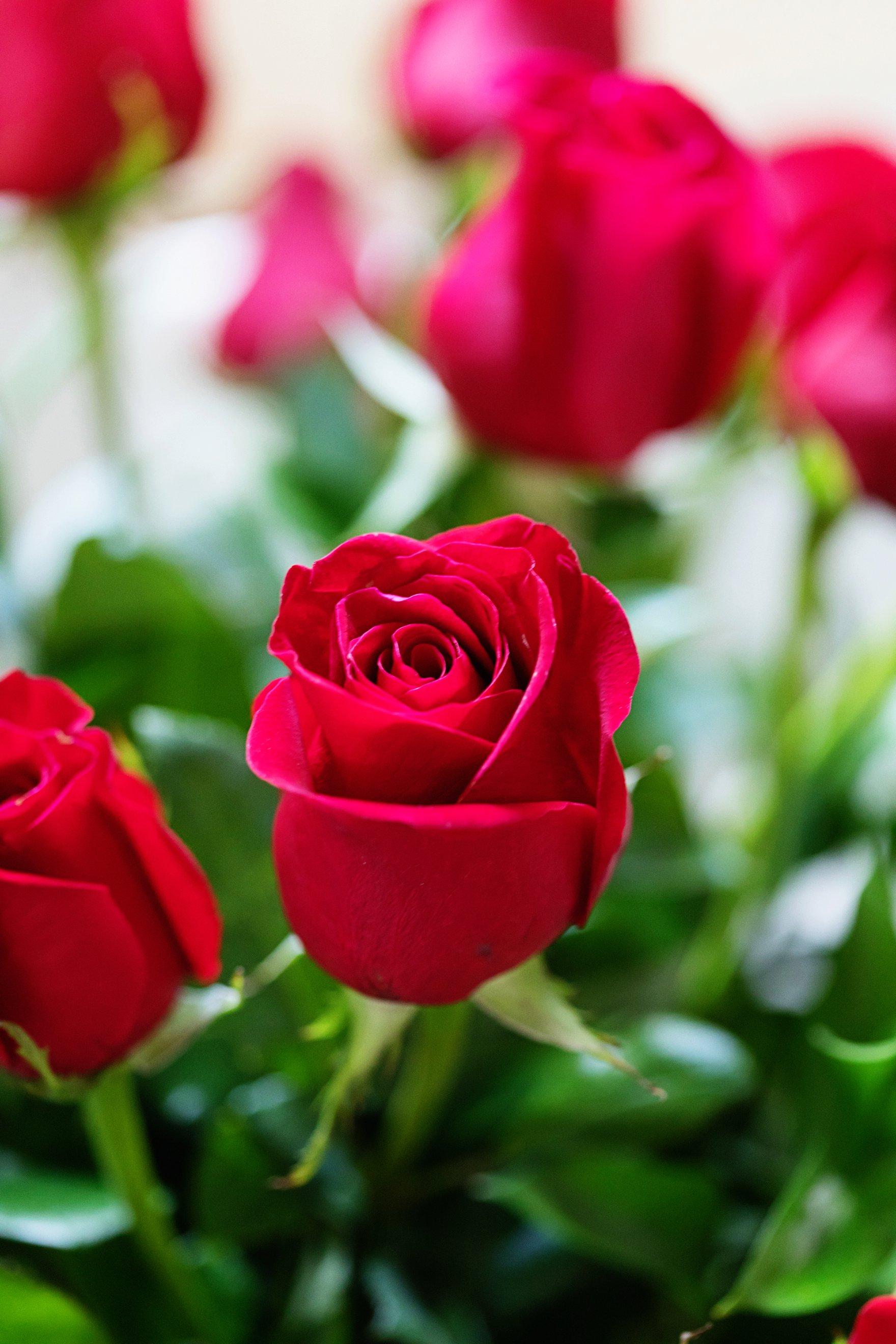 FTD two dozen roses for valentine's day